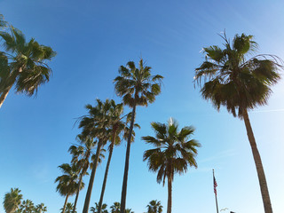 View of palm trees against sky background