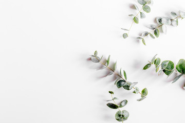 spring with morden herbal mockup on white background top view