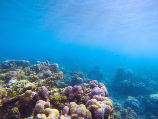 Coral reef with sunlight ray in blue water. Tropical seashore underwater photo.