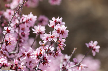Spring flowers with blured background