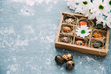Easter quail eggs in wooden box with flowers . Easter background