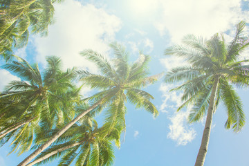 Palm tree and blue sky under sunlight. Tropical scene with palm leaves on sky background.