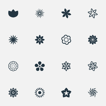 Vector Illustration Set Of Simple Blossom Icons. Elements Gerberas;, Narcissus, Camomile And Other Synonyms Saffron, Morning Glory And Water Lily.