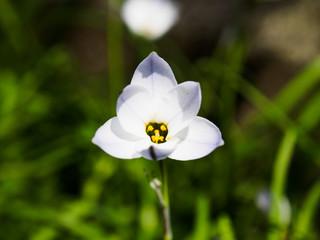 花芯が顔に見える