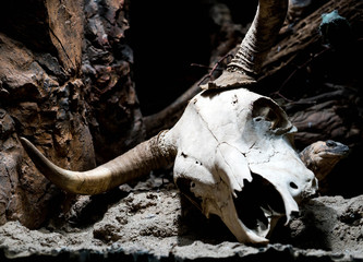 Cow Skull with Lizard Photo Bomb