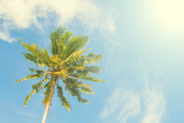 Palm tree and blue sky retro toned image. Tropical nature idyllic photo for banner background.