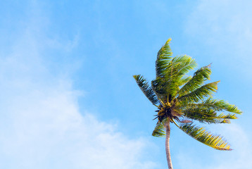 Palm tree and blue sky retro toned image. Tropical nature minimal photo for banner background.