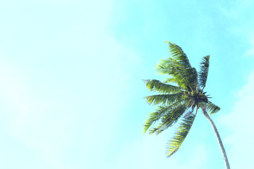 Coco palm tree on blue sky background. Sunny day on tropical island.