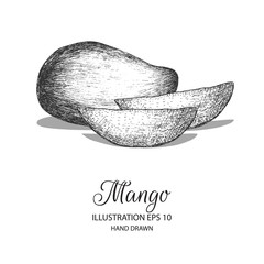 Mango hand drawn illustration by ink and pen sketch. Can be adapted for natural or organic fruit product and health care goods.