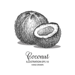 Coconut hand drawn illustration by ink and pen sketch. Can be adapted for natural or organic fruit product and health care goods.