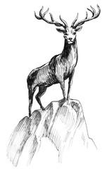 Deer on the rock