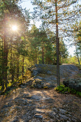 forest with rocks and sun