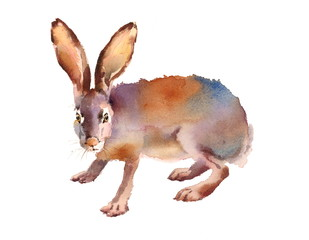 Watercolor Wild Animal Hare Hand Drawn Illustration isolated on white background