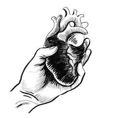Hand holding a human heart