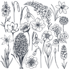 Collection of hand drawn spring flowers and plants.