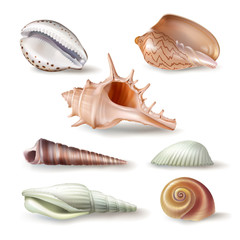 Set of vector illustrations, badges, stickers, seashells of various kinds in realistic style isolated on white