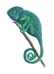 Watercolor painting chameleon isolated on white background