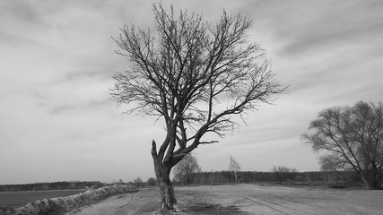 One lonely tree is standing isolted on a field with snow during the winter