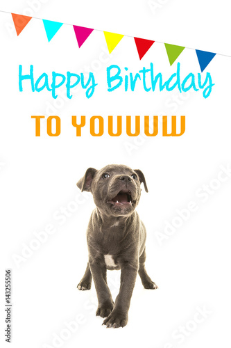 Cute Grey Stafford Terrier Puppy Dog Singing Happy Birthday To You On A Card White Background