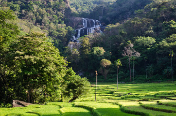 Rathna Ella, at 111 feet, is the 10th highest waterfall in Sri Lanka, situated in Kandy District. The main occupation of the villagers in Rathna Ella is paddy cultivation