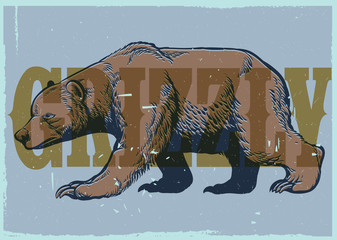 Hand drawing style of vintage grizzly bear poster