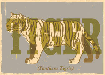 hand drawing style of vintage tiger poster