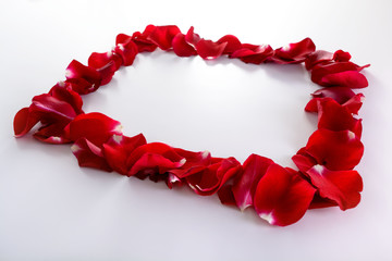 Beauty frame from rose's petals. Low angle view