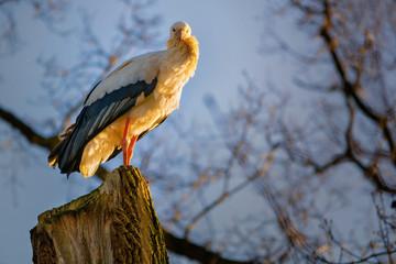 Ein Storch sitzt auf einem Baumstumpf