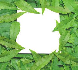 With paper card note is surrounded by leaves.