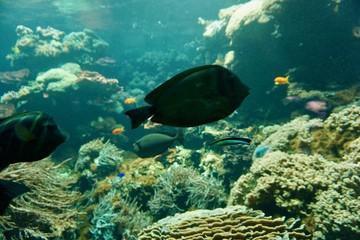 Korallenriff 2