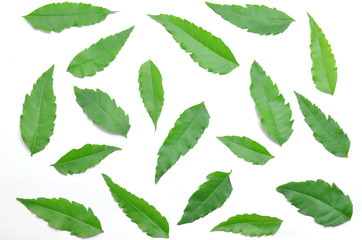 Many green neem leaves spread on the floor.