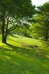 公園 散歩道