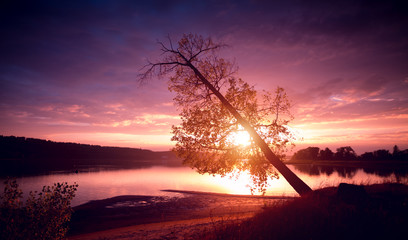 Calm lake with autumn tree on the coast at sunset