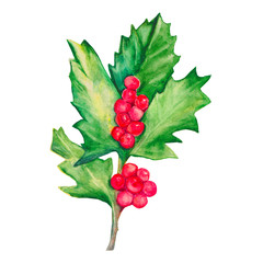 Sprig of holly isolated on a white background. Holly with red berries. Watercolor illustration.