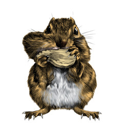 Chipmunk stands and shoves the nut for the cheek, a big swollen cheek, sketch vector graphics color picture