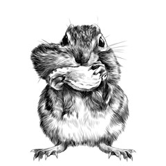 Chipmunk stands and shoves the nut for the cheek, a big swollen cheek, sketch vector graphics black and white drawing
