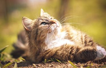 Portrait of a cat that luxuriate in the sun