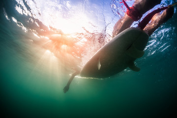 Wall Mural - Underwater view of the person paddling surfboard