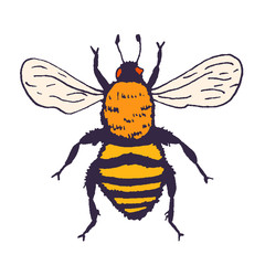Vector bee illustration. Hand drawn ink sketch with bumblebee insect. Wild animal drawing