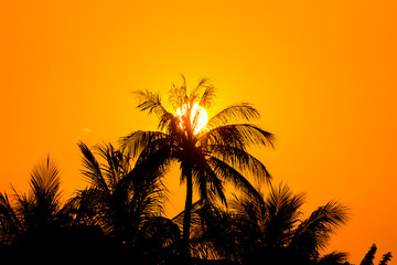 Sunset Beach with palm trees and sky landscape.