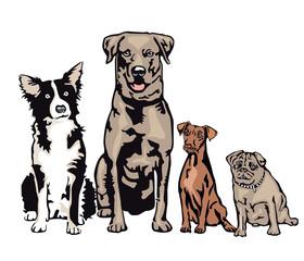 vier Hunde warten in einer Reihe