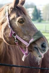 Porträtfoto eines Pferdes