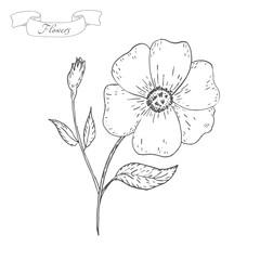 Vintage Flower sketch. Flower background. Hand drawn card vector illustration.