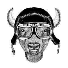 Vintage images of buffalo, bison, ox for t-shirt design for motorcycle, bike, motorbike, scooter club, aero club