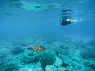 Tropical vacation sport activity. Sea tortoise in nature