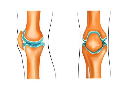 a healthy knee