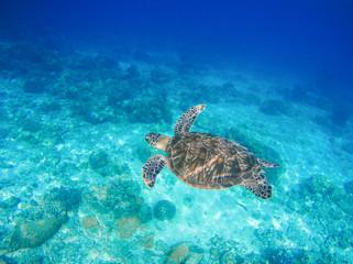 Sea animal and plants. Oceanic environment underwater photo.