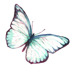 A flying butterfly is a white watercolor. Illustration of watercolors