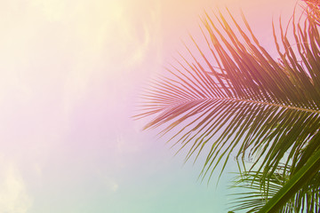 Palm tree leaves on sky background. Palm leaf over sky. Pink and yellow toned photo.