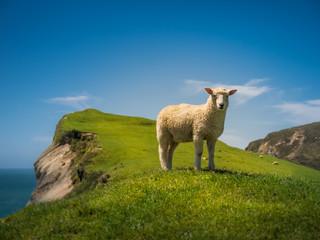 Fond de hotte en verre imprimé Sheep Cliff Sheep